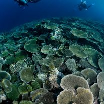 Coral Garden and Divers