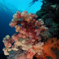 Soft Coral Underwater Photographer