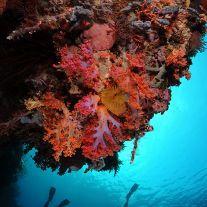 Soft Coral Overhang