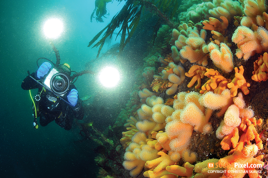 Sebastian Hernandis from Bluescreen filming the coral reef in Bakkastraumen