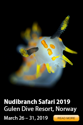 Nudibranch Safari 2016 RIGHT
