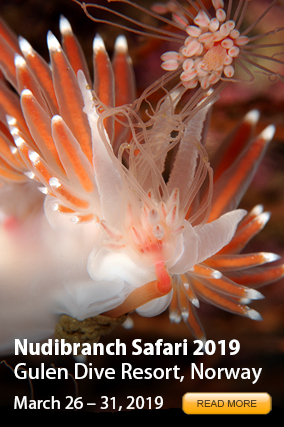 Nudibranch Safari 2016