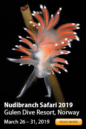 Nudibranch Safari 2016