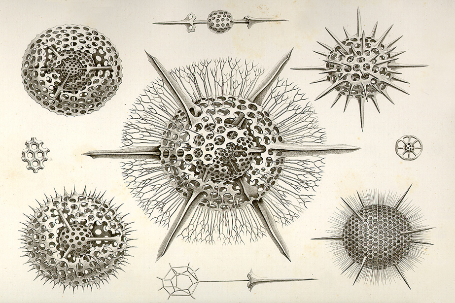 radiolarians-what-s-that