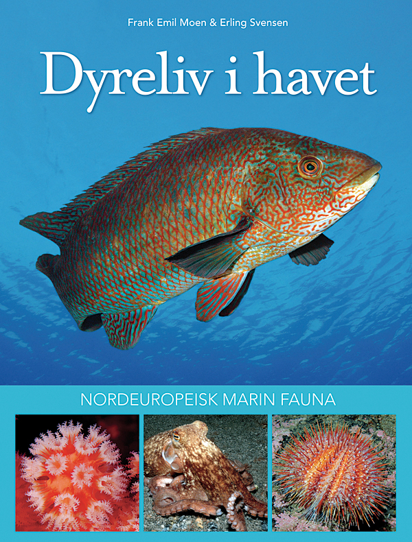 marine-life-of-northern-europe