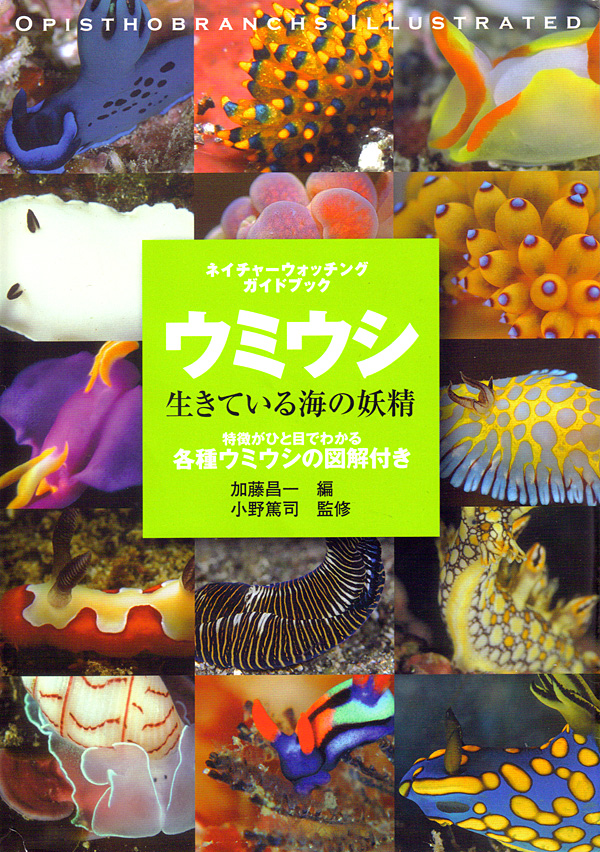 japanese-nudibranch-book