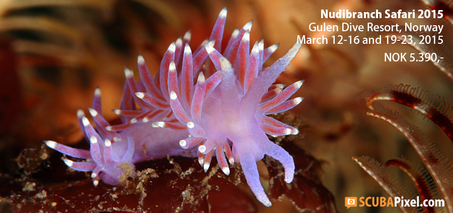 Join the Nudibranch Safari!