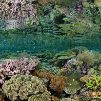 Coral Reflection